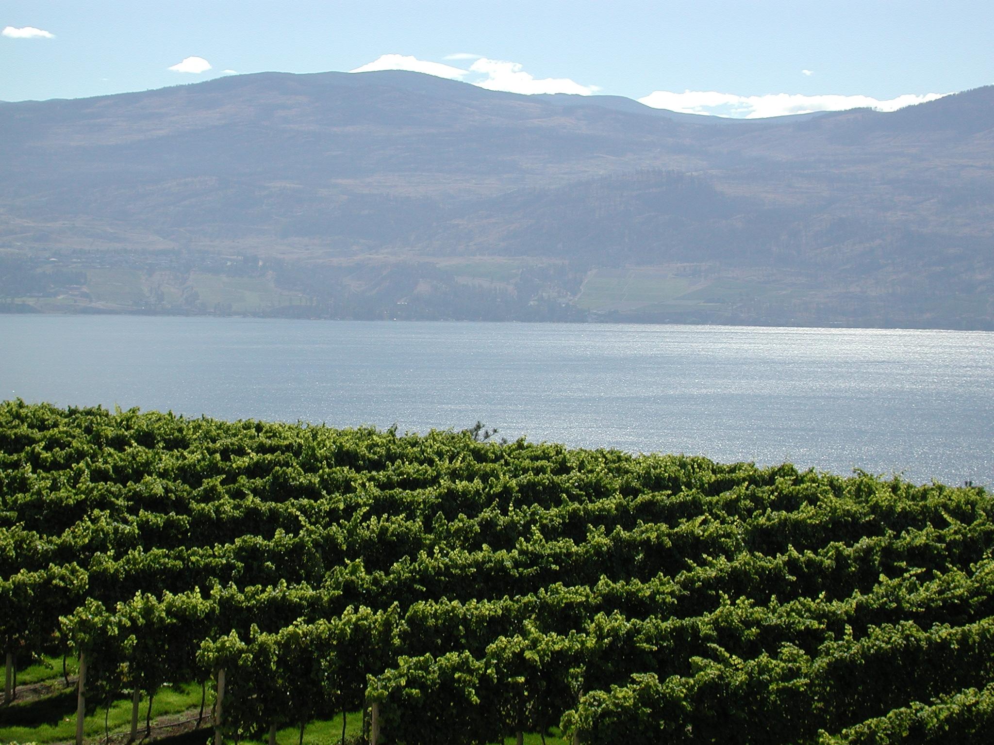 Invertir en vino fondo inversion